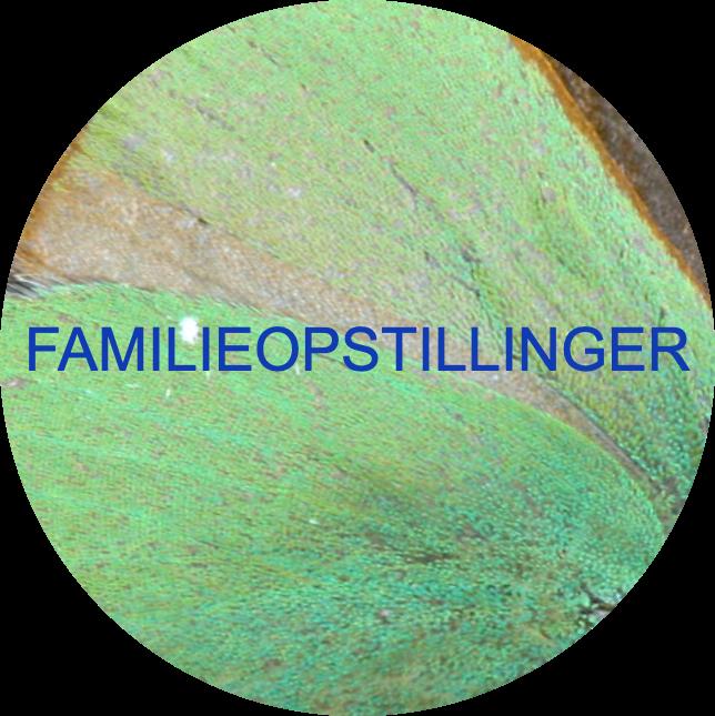 Familieopstillinger ved Michael Soederberg